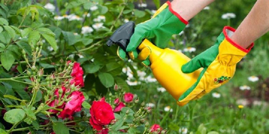Садовое товарищество: плюсы и минусы